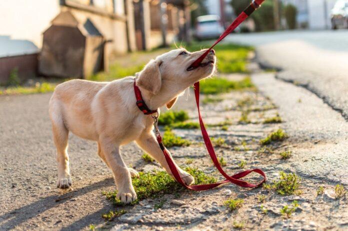 Hukum Kenajisan Tas Belanja Dijilati Anjing dan Air Liurnya Telah Kering