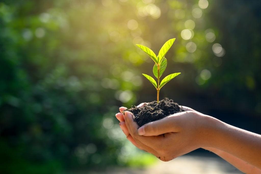 Islam Perintahkan Jaga Alam dan Larang Perusakan Lingkungan